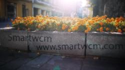 Pagematics Smartwcm