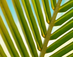 Palm Sunday - Quiz